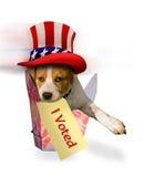 在爱国帽子的小猎犬小狗 免版税库存照片