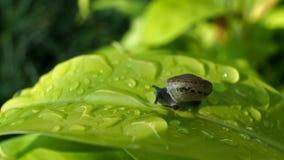 在爱树木的人的蜗牛 库存图片