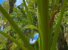 在爱树木的人的HDR水晶球 库存照片