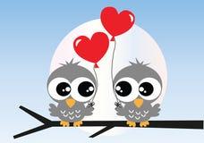 在爱的两头甜猫头鹰 免版税库存照片