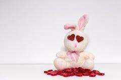 在爱的兔子 库存照片