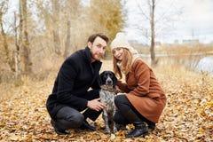 在爱的夫妇在一温暖的秋天天在有一个快乐的狗西班牙猎狗的公园走 爱和柔软在男人和妇女之间 图库摄影