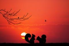 在爱的灰鼠在日落 免版税库存图片