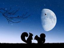 在爱的灰鼠在月光 免版税图库摄影