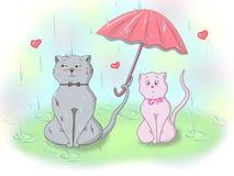 在爱的猫 库存图片
