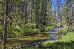 在爱达荷山的小小河 库存图片