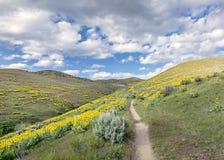 在爱达荷的脚小山的黄色花 免版税库存图片