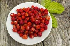 在牌照的草莓 库存照片