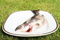 在牌照的鱼 库存照片