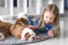 在牛头犬之间一只小女孩和逗人喜爱的小狗的友谊  库存照片