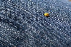 在牛仔裤的瓢虫 免版税库存图片