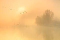 在牛津,英国附近的泰晤士河。 库存照片