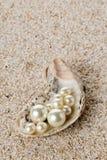 在牡蛎海壳的多颗珍珠在沙子 库存图片