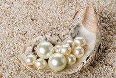 在牡蛎海壳的多颗珍珠在沙子 免版税库存图片