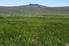 在牡鹿山羚羊避难所的草甸花 库存图片