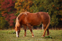 在牧场地和秋季风景的马 免版税库存照片