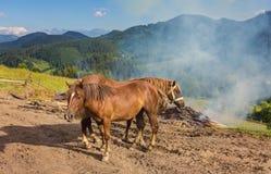 在牧场地的两匹马 库存图片