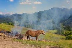 在牧场地的两匹马 免版税库存图片