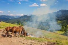 在牧场地的两匹马 库存照片