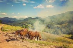 在牧场地的两匹马 免版税库存照片