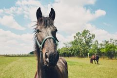 在牧场地的二匹马 库存图片