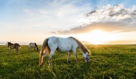 在牧场地的马在日落附近的11月的 免版税库存照片