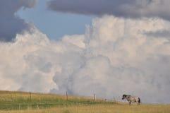 在牧场地,多云天空的马 库存照片