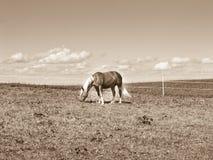 在牧场地(171)的马 库存照片