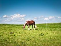 在牧场地(174)的马 库存照片