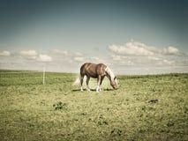 在牧场地(173)的马 免版税库存图片
