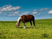在牧场地154的马 库存图片