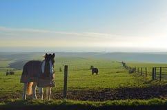 在牧场的马的恶魔的堤的在东萨塞克斯郡,英国 免版税库存照片