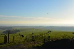 在牧场的马的恶魔的堤的在东萨塞克斯郡,英国 库存照片