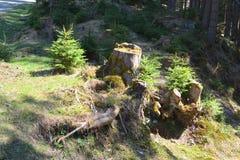 在特兰西瓦尼亚环境美化, Moeciu,罗马尼亚森林里  图库摄影