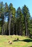 在特兰西瓦尼亚环境美化, Moeciu,罗马尼亚森林里  免版税图库摄影
