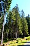 在特兰西瓦尼亚环境美化, Moeciu,罗马尼亚森林里  免版税库存图片