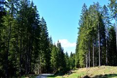 在特兰西瓦尼亚环境美化, Moeciu,罗马尼亚森林里  库存照片
