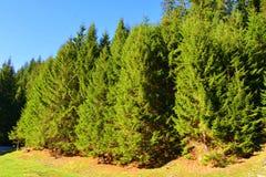 在特兰西瓦尼亚环境美化, Moeciu,罗马尼亚森林里  库存图片