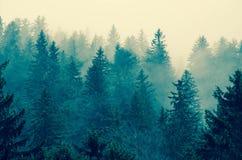 在特兰西瓦尼亚的有雾的山的树 免版税图库摄影