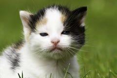 在特写镜头的一只小狗猫与绿色 免版税库存照片