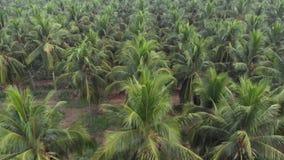 在特写镜头采取的椰子农场鸟瞰图射击在FPV作用first-person视图 股票录像