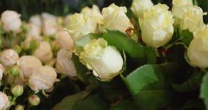 在特写镜头的白玫瑰 股票录像