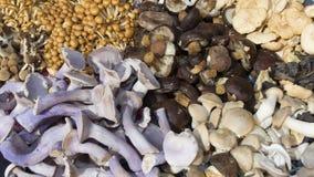 在特写镜头的蘑菇 库存图片