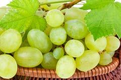 在特写镜头的绿色葡萄 免版税库存图片
