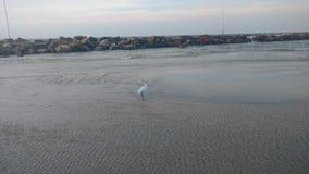 在特拉唯夫海岸的一只白色海鸥  图库摄影