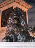 在特拉法加广场伦敦的著名狮子在晚上 库存图片
