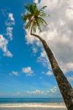 在特立尼达和多巴哥Maracas海湾蓝天和海滨人行道的热带海滩棕榈树 库存照片