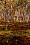 在特罗姆瑟挪威的森林本质的秋天 库存照片
