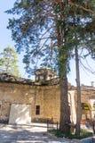 在特罗扬修道院的疆土的圣洁杉木在保加利亚 库存图片