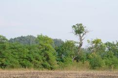 在犁土地旁边的林木线 免版税库存照片